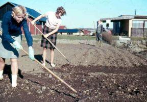 Havearbejde i nederdel